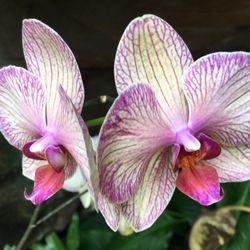 Photo Of Foellinger Freimann Botanical Conservatory   Fort Wayne, IN,  United States