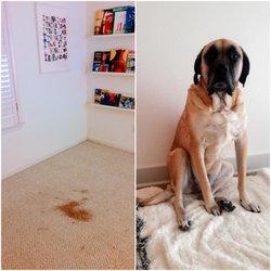 photo of addis carpet cleaning austin tx united states