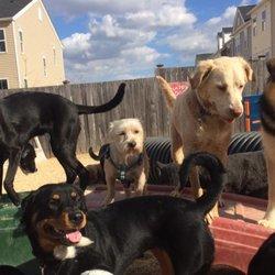 Happy Dog Day Care Ellicott City Md