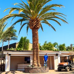 Photo Of Moon Valley Nurseries Palm Paradise Escondido Ca United States Canary