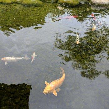Japanese friendship garden 1341 photos 279 reviews for Japanese friendship garden san jose koi fish