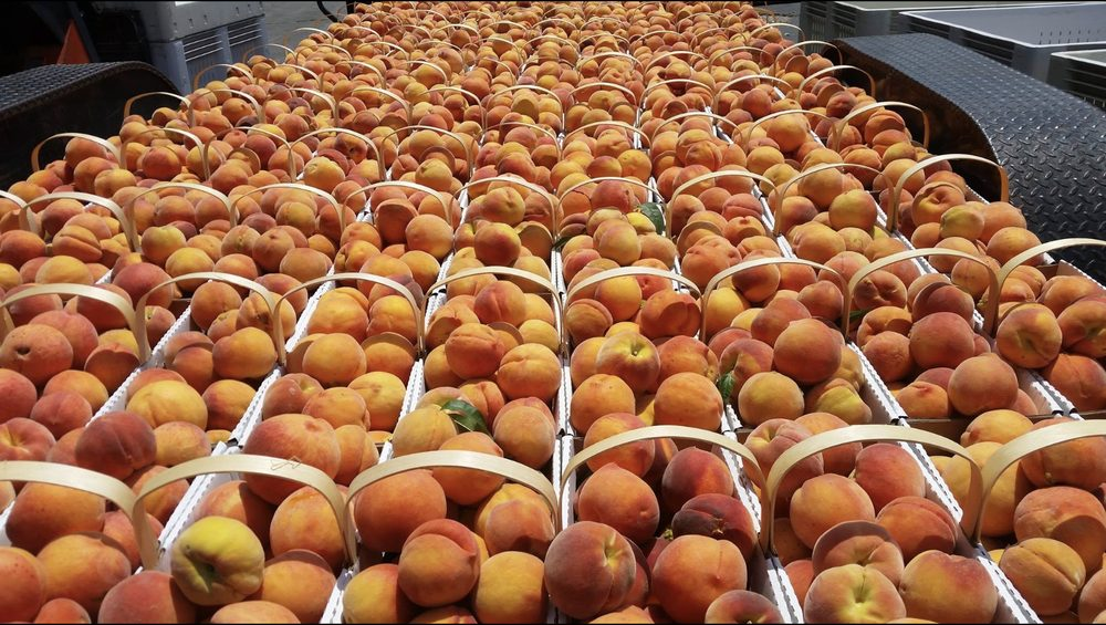 Murphy Orchard: 255 S Hwy 60, Marionville, MO