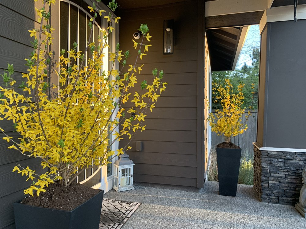 Johnsons Home & Garden: 26625 Maple Valley Black Diamond Rd SE, Maple Valley, WA