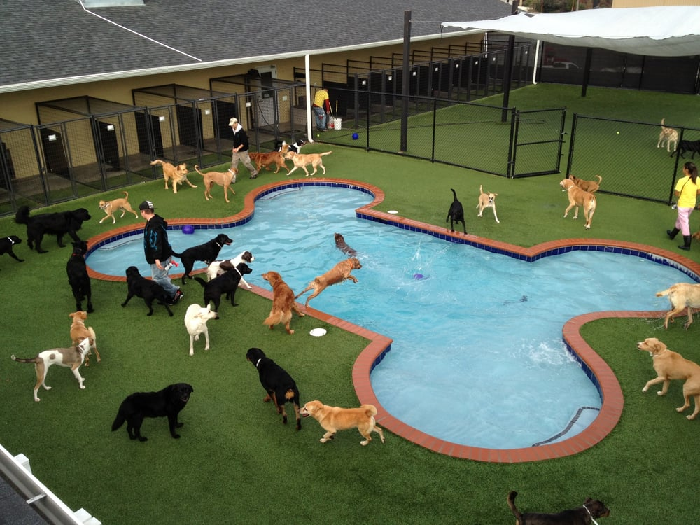 Pet paradise pet boarding pet sitting 125 ponce harbor for Dog kennels near disney world