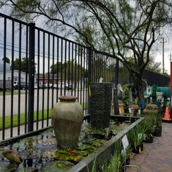 Photo Of Buchananu0027s Native Plants   Houston, TX, United States
