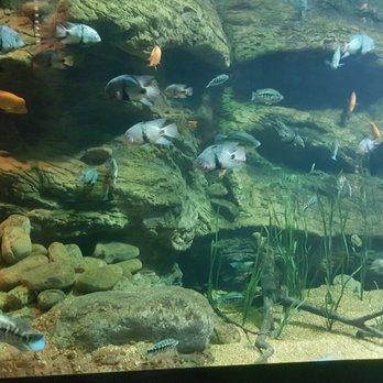 Tennessee Aquarium 387 Photos 225 Reviews Aquariums