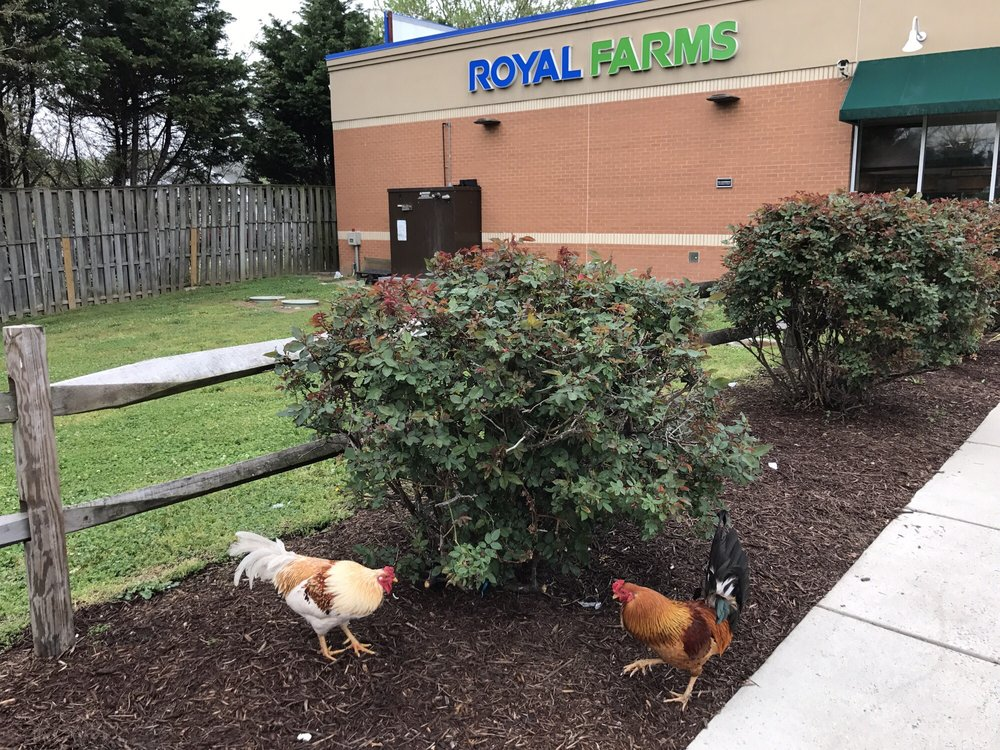 Royal Farms 103: 20474 Lankford Hwy, Parksley, VA