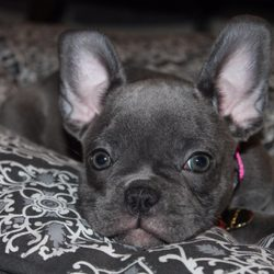 Top 10 Best Free Puppies In San Diego Ca Last Updated April 2019