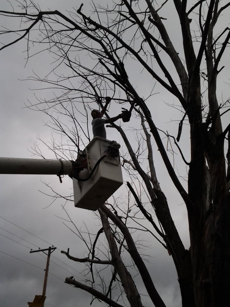 Overgrown Tree Service: 14165 Naples St NE, Ham Lake, MN