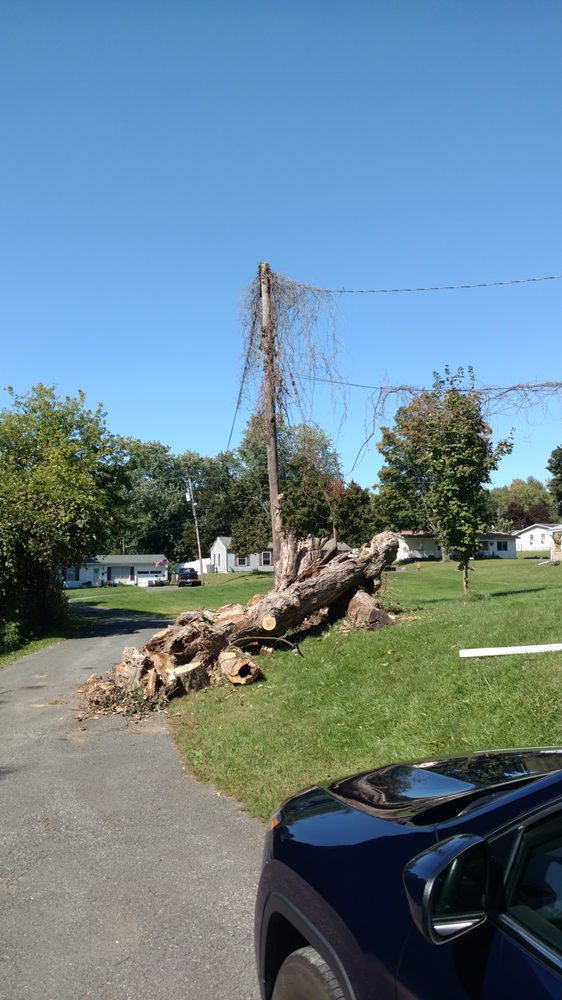 A Cut Above Tree & Stump Removal: 9766 Korber Rd, Holland Patent, NY