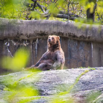 Bronx Zoo 3170 Photos 969 Reviews Zoos 2300 Southern Blvd