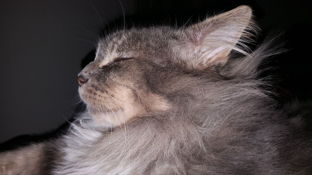 Cats in The City: 415 NE 80th Ave, Portland, OR
