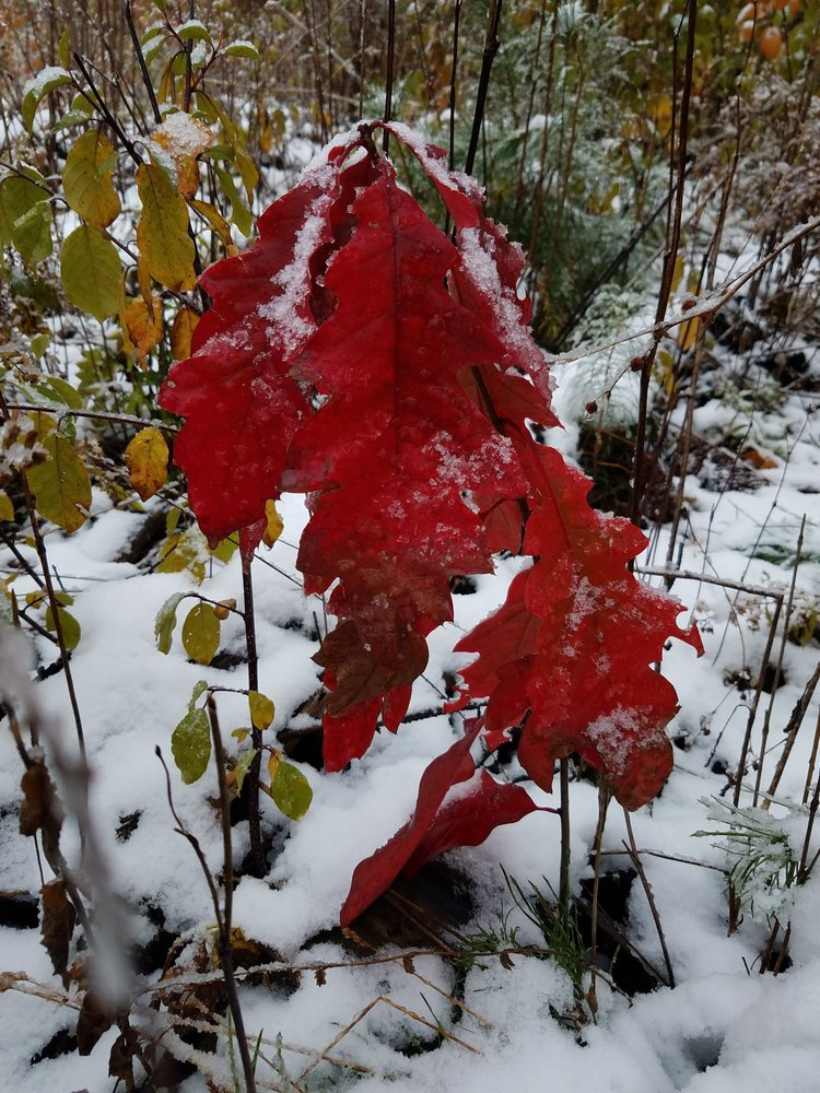 Hartley Nature Center: 3001 Woodland Ave, Duluth, MN