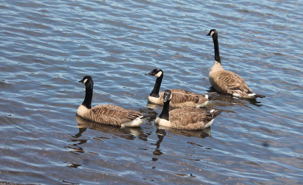 Southard's Pond: Roosevelt St, Babylon, NY