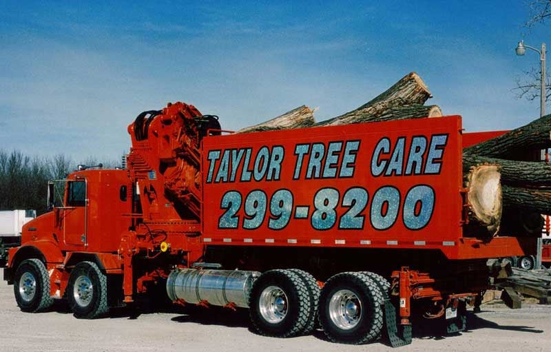 Photo Of Taylor Tree Care