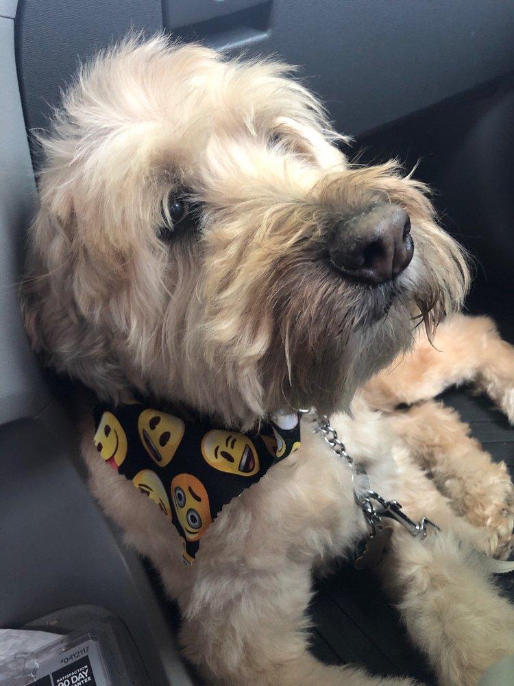 Dog Wash Cafe - Crabapple