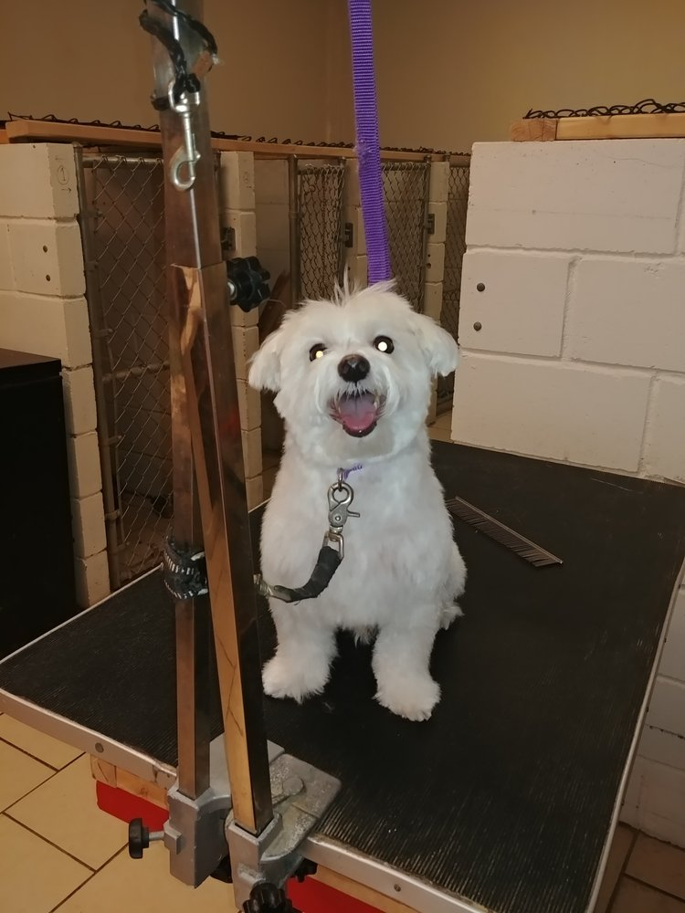 Oodles and Doodles Pet Grooming And Boarding: 8647 N Boone School Rd, Capron, IL