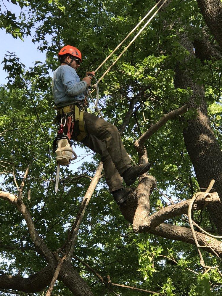 Bay Tree Care