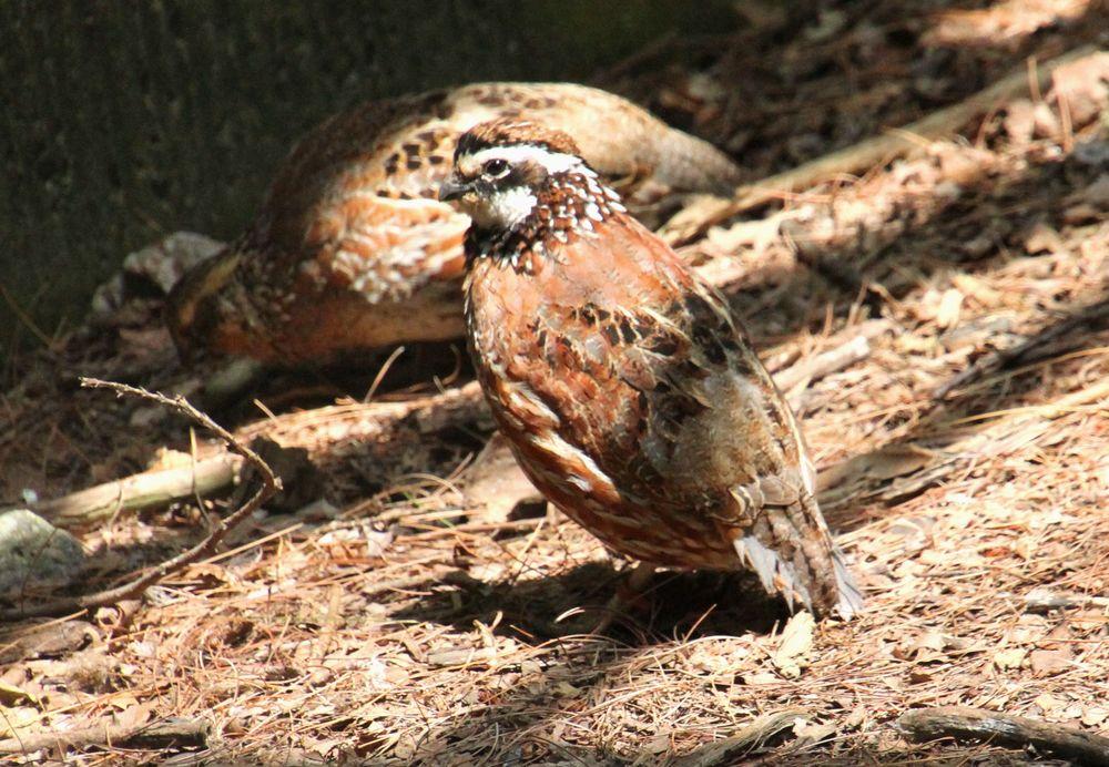 Queens Zoo: 5351 111th St, Corona, NY