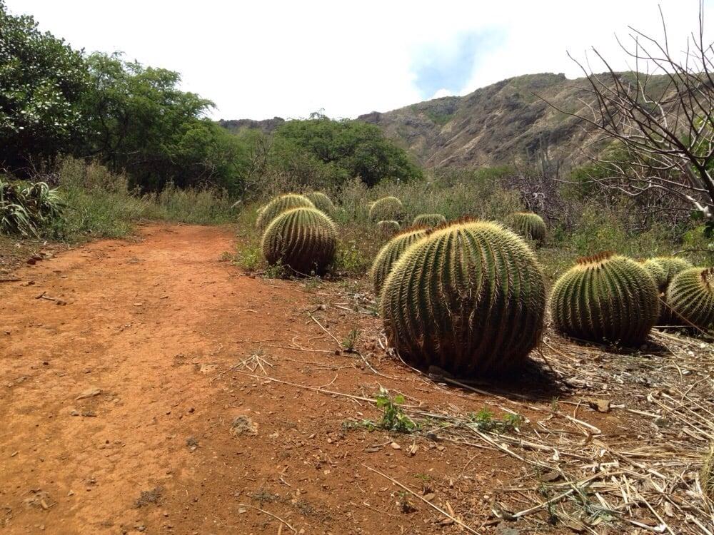 Cactus Balls Yelp