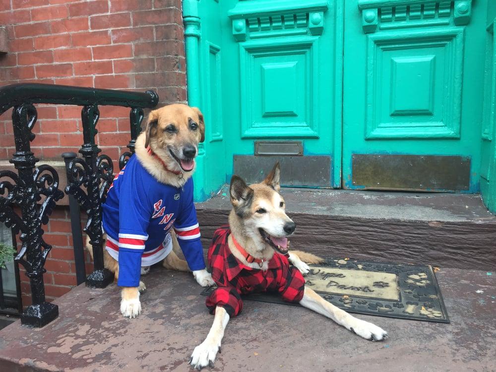 Dogger: 382 13th St, Brooklyn, NY