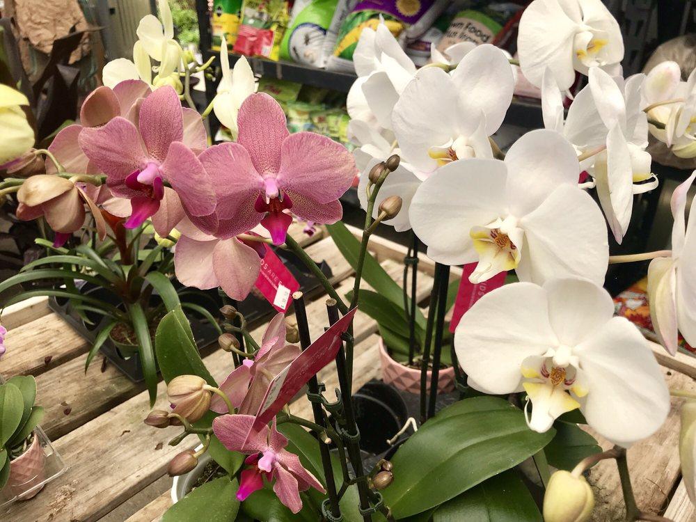Girouard's Nursery and Greenhouse: 402 S Saint Pierre St, Broussard, LA