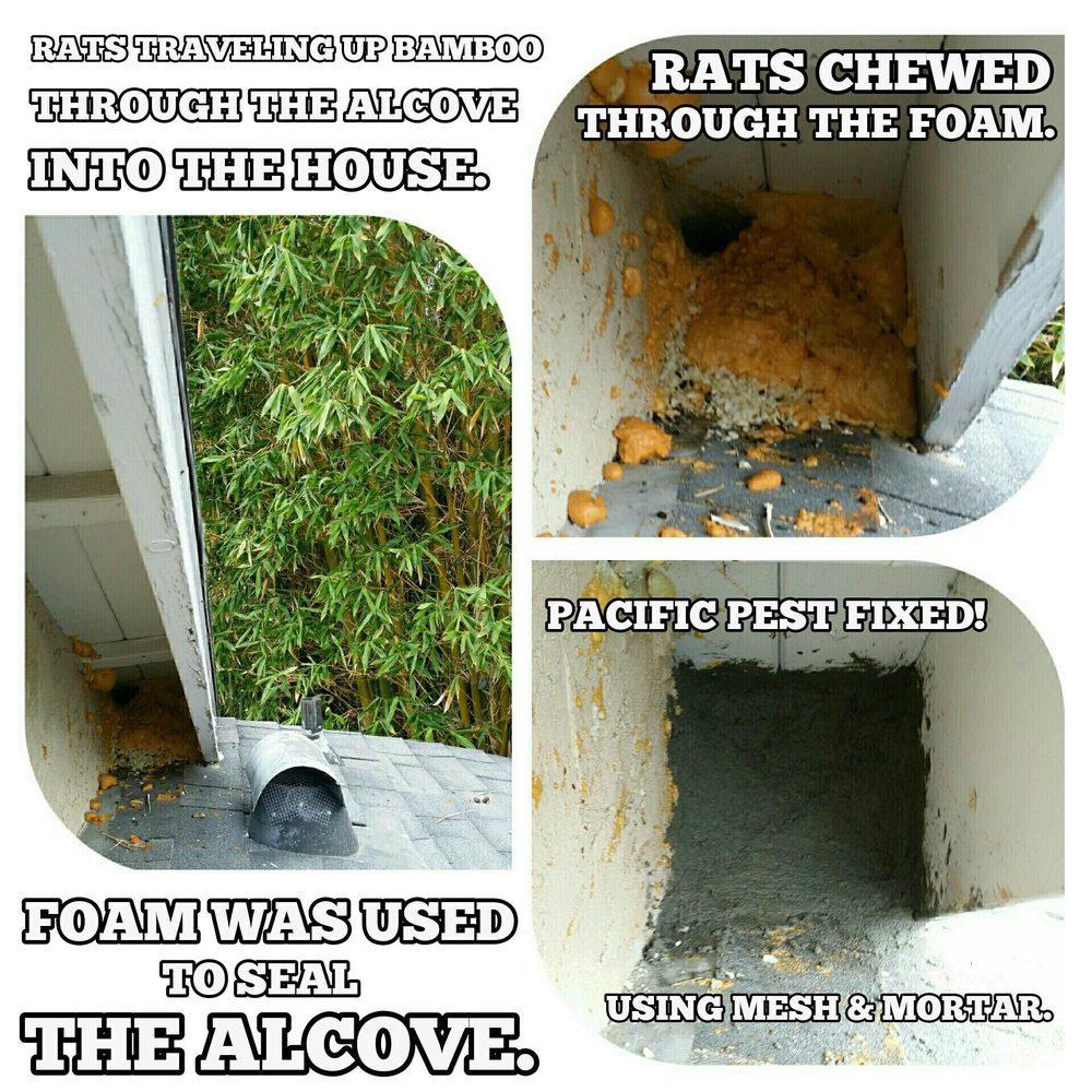 Pacific Pest Control
