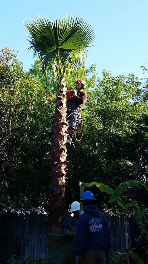 Titan Tree Service