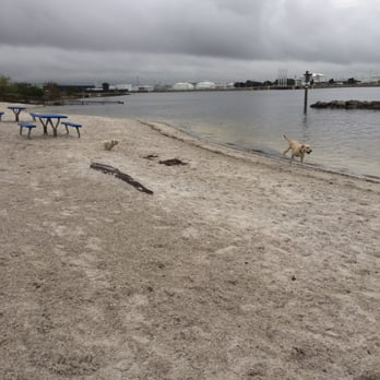 Photo Of Davis Island Dog Beach Tampa Fl United States