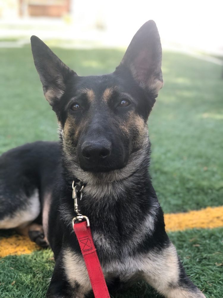 Carolina Canine Training: Davidson, NC