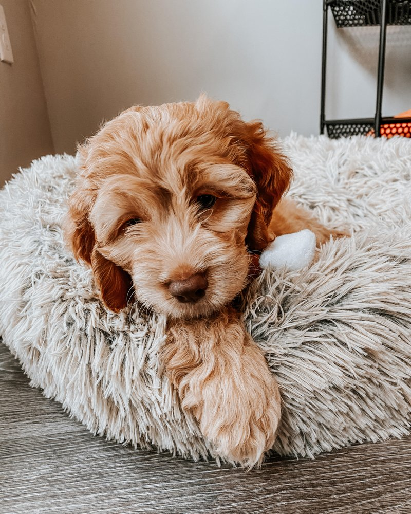Puppy Place: 2024 380th St, Hawarden, IA