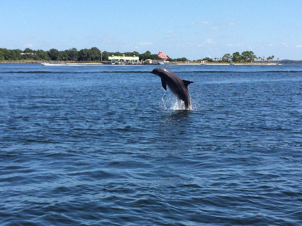 Flippers Dolphin Tours: 5201 N Lagoon Dr, Panama City, FL