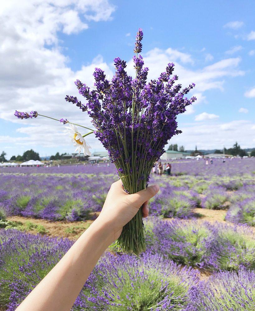 Oregon Lavender Farm