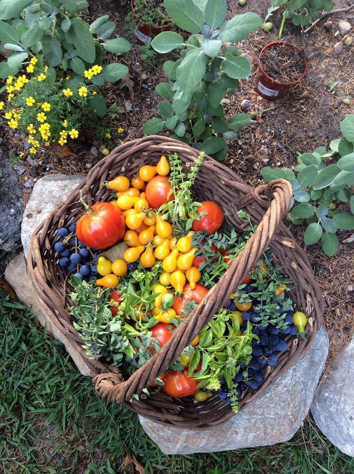 Back In Thyme Herb Farm And Kitchen: 493 Main St, Hopkinton, RI