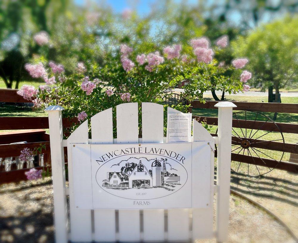 Newcastle Lavender Farms: 2450 Paddock Ln, Newcastle, CA