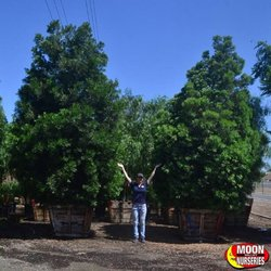 Photo Of Moon Valley Nurseries Chino Ca United States