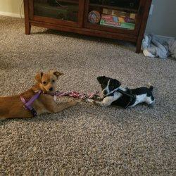 Lewisville Animal Shelter & Adoption
