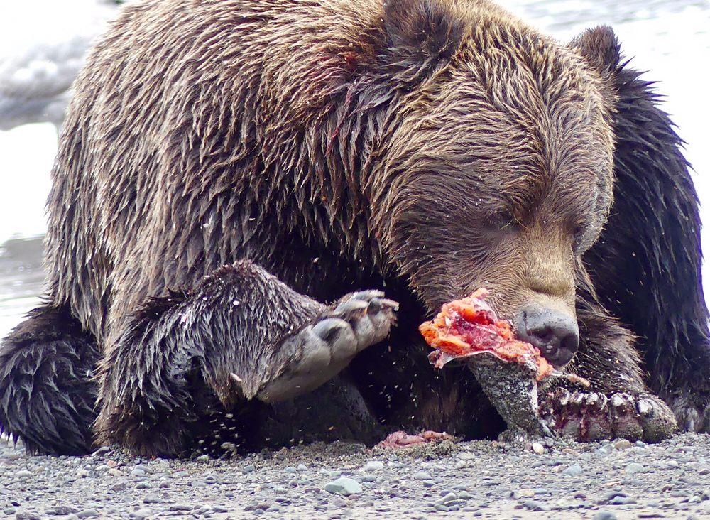 Alaska Bear Adventures: 4287 Homer Spit Rd, Homer, AK