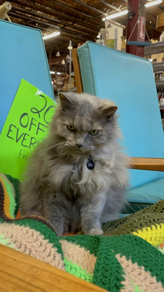 Alley Cat Vintage Mercantile