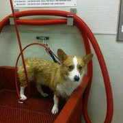 Bentleys dog wash fine grooming spa 34 reviews pet groomers photo of bentleys dog wash fine grooming spa plano tx united states solutioingenieria Image collections