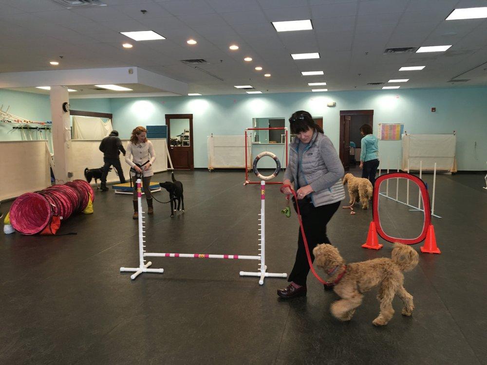 Everydog Training Center: 29 Andover St, Danvers, MA