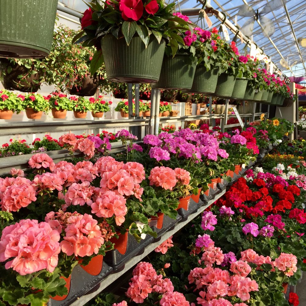 Bergen's Greenhouses: 801 Willow St W, Detroit Lakes, MN
