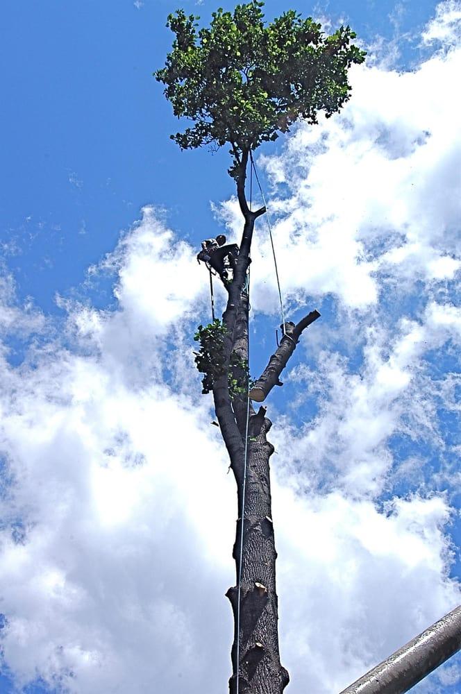 Aerial Arborist Tree Service: Imperial, PA