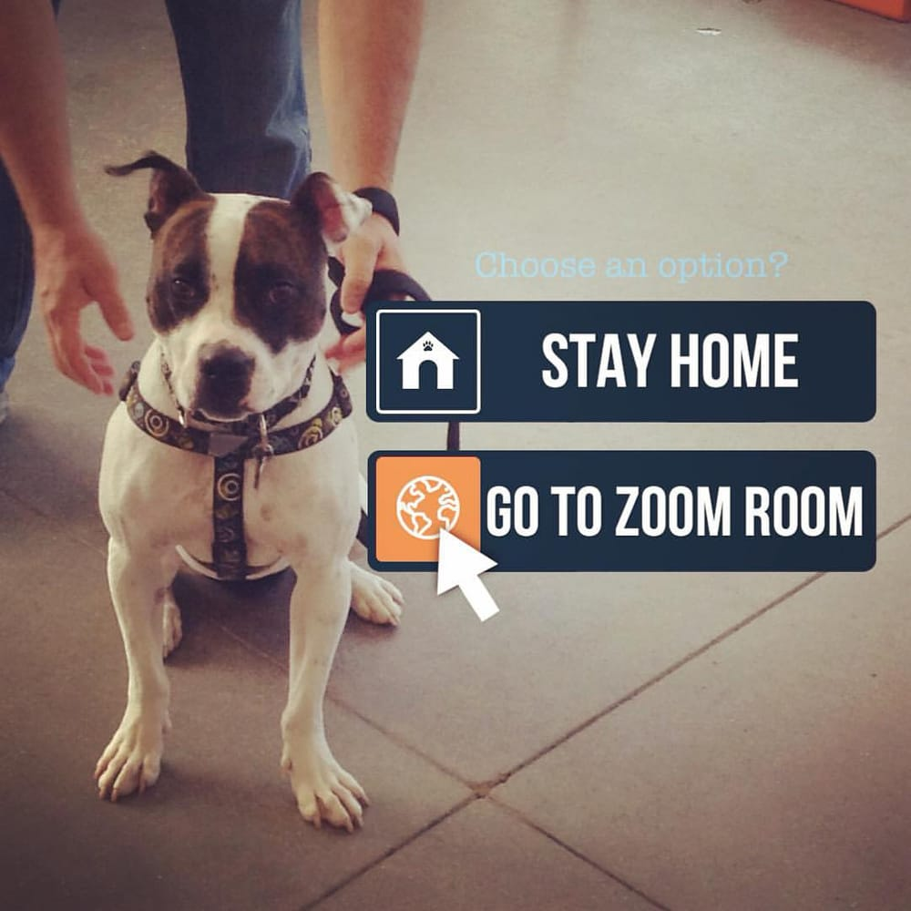 Zoom Room Dog Training