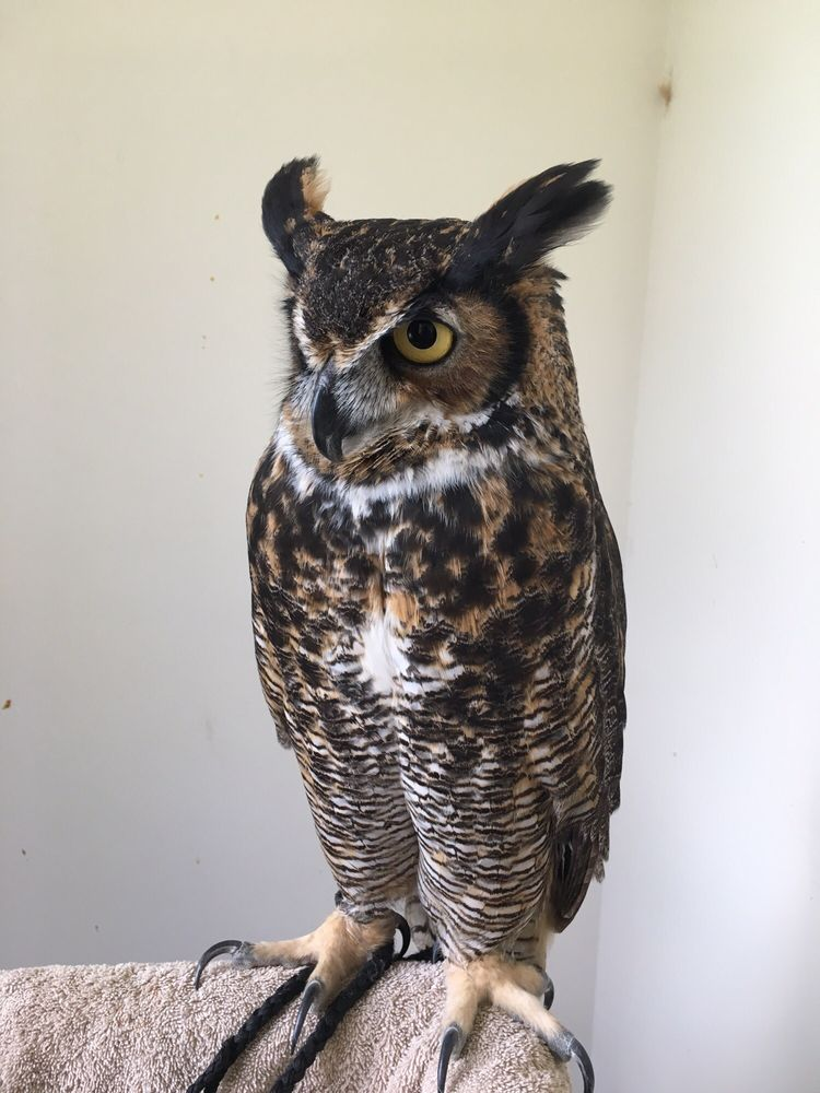 Cape Fear Raptor Center: 9185 US Hwy117S, Rocky Point, NC