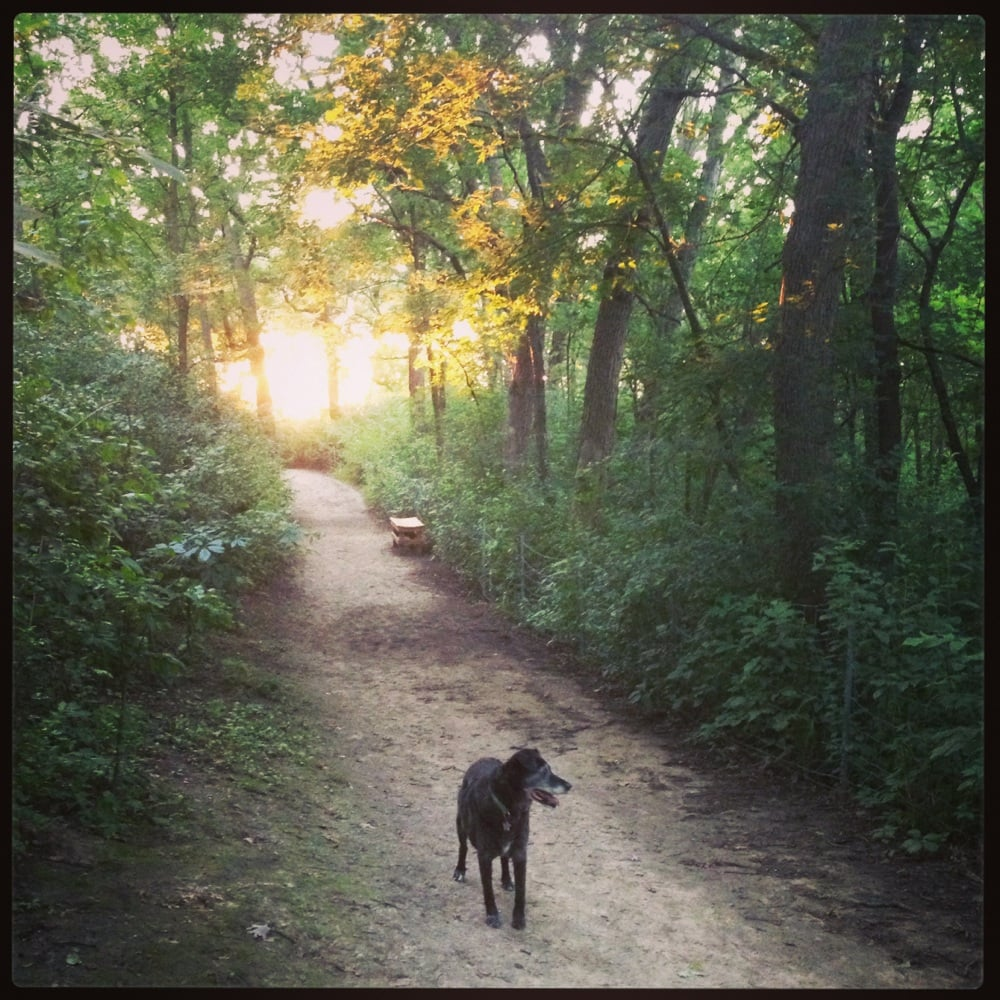 battle creek dog park