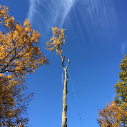 Rt Tree Service: 510 Austin Ave, Barrington, NJ