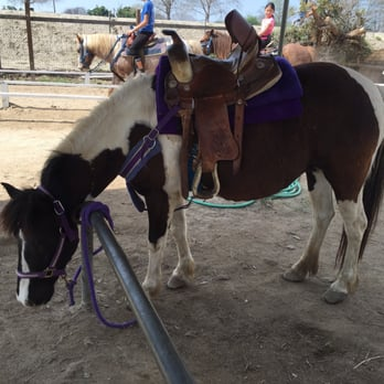 Pony Time At Lakewood Equestrian Center 14 Photos