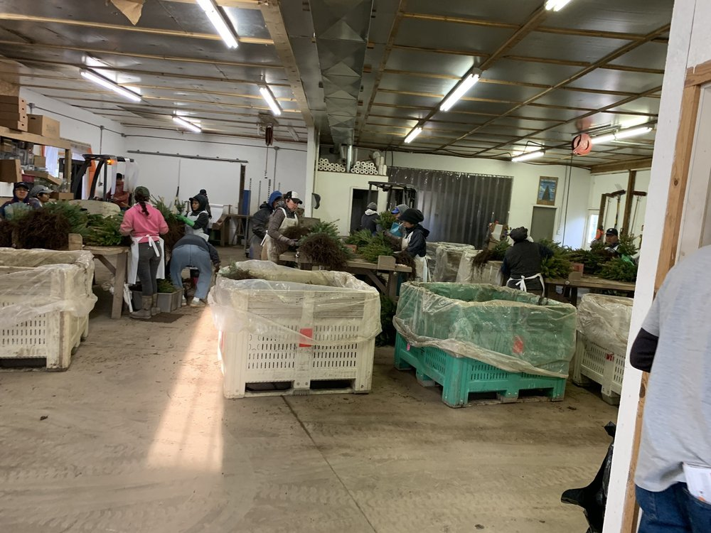 Northern Pines Nursery: 2300 S Morey Rd, Lake City, MI