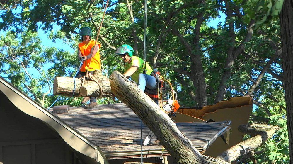 ACG Tree Service: 204 E High St, Union City, MI